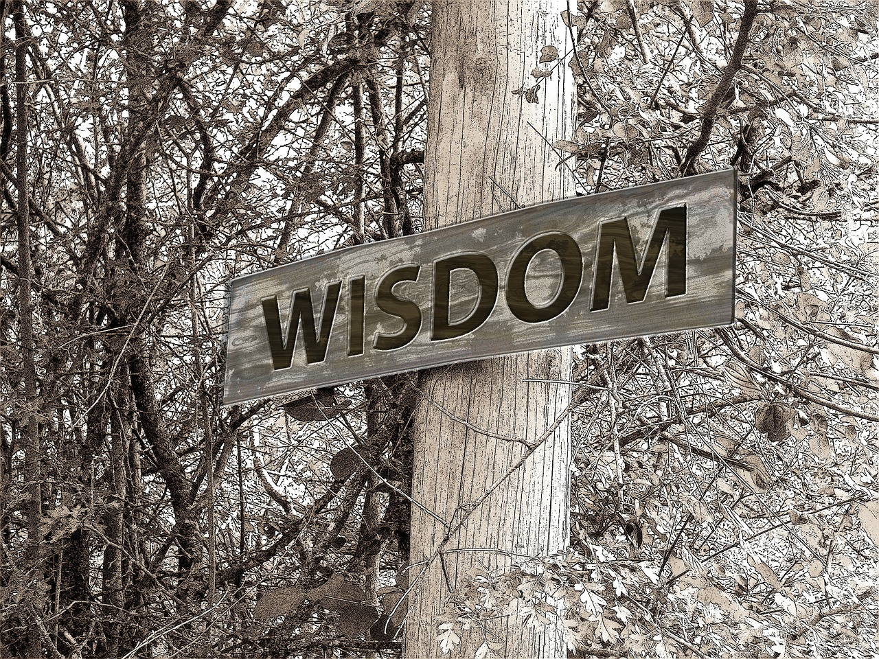 wisdom is best aqcuired as soon as you require it - Psychic answers